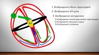 Фундаментальные знания об ЭКГ часть 3 (ЭДС сердца, проводящая система сердца)