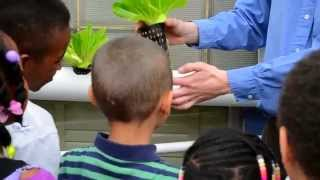 Ladybug Workshop In The Living Aquaponic Classroom