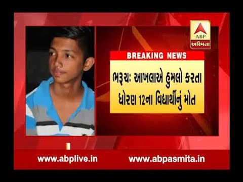 Bharuch : 12th Standard Student And Woman Died In Bull Attack
