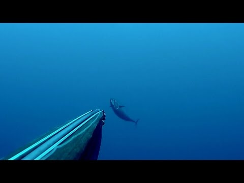 spearfishing pelagic
