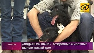Бездомные животные обрели новых хозяев в Гомеле