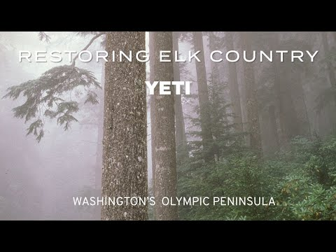 Restoring Elk Country - Washington's Olympic Peninsula