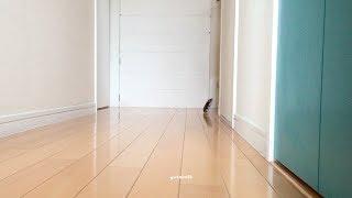 動画撮影日:2016年9月29日 ハムム、はじめての廊下んぽ(廊下でお散歩...
