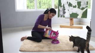 Video Kittypedia Episode 3 - Gimme Some Whiskas, Please download MP3, 3GP, MP4, WEBM, AVI, FLV Desember 2017