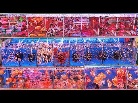 Biggest Fish Market In the World! - Aquarium Co-Op
