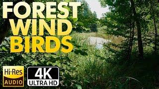 Лес. Ветер. Птицы. Озеро в глубоком лесу ●UHD 4К●