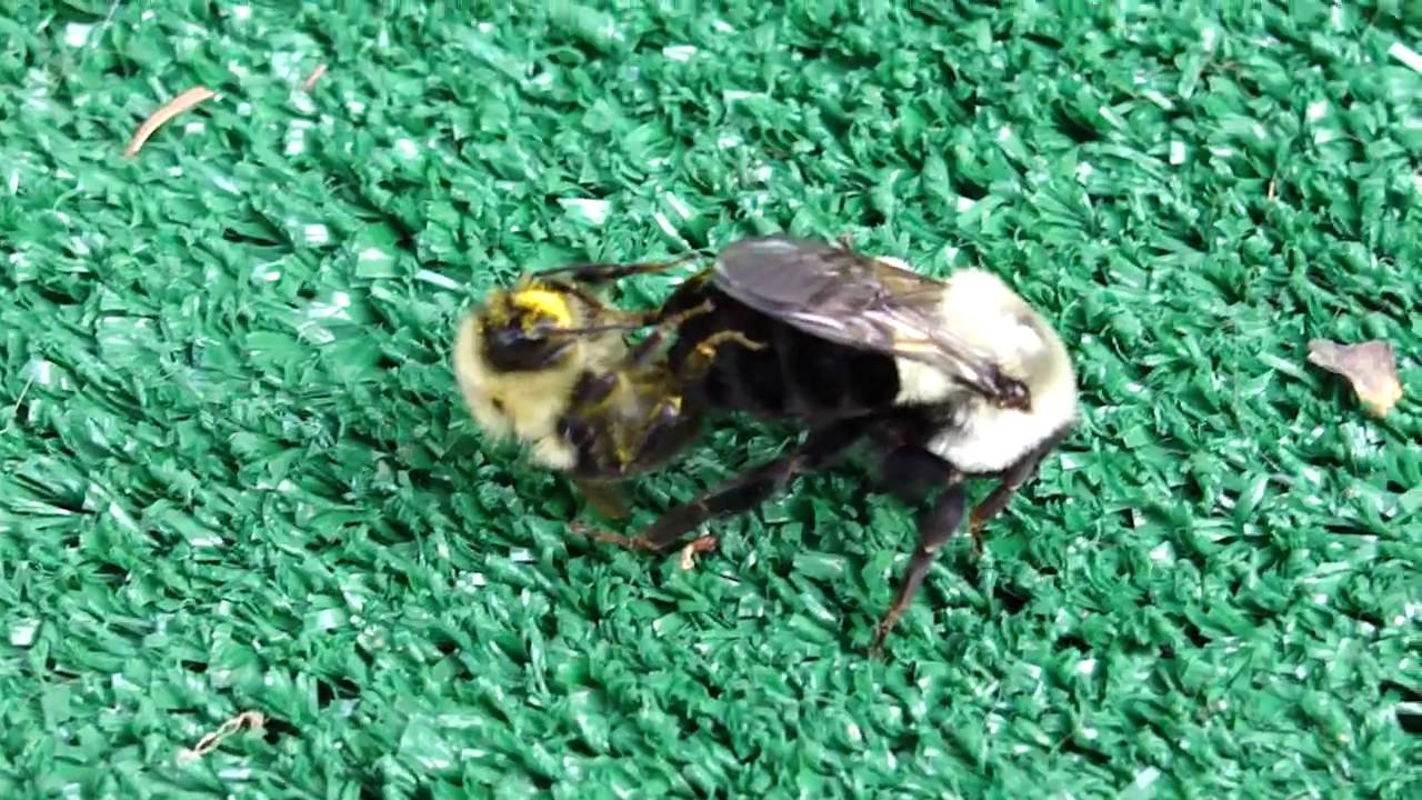 How to breed bees 64