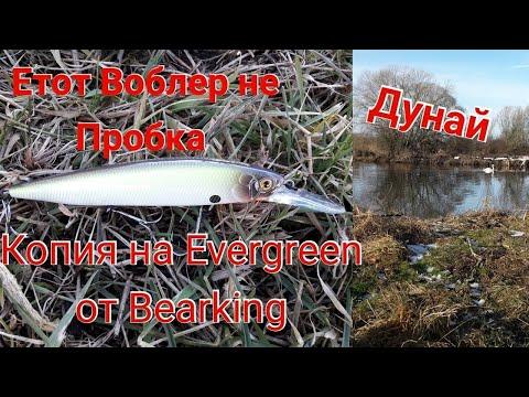 Bearking Копия на Evergreen не Пробка на Дунайе