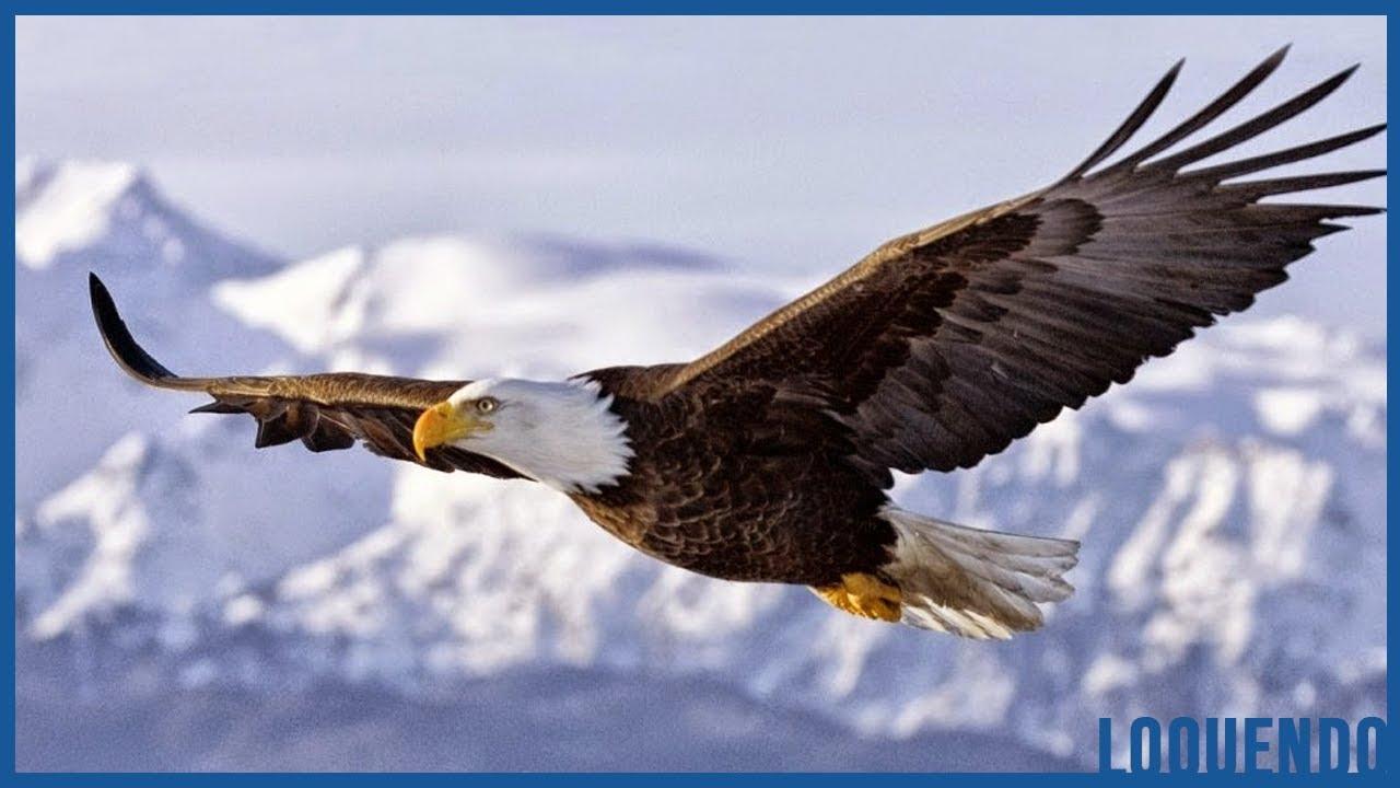 La Historia del Águila [para reflexionar] LA RENOVACIÓN DEL AGUILA ...
