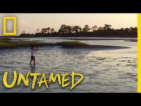 Untamed with Filipe DeAndrade (Trailer) | Nat Geo Wild