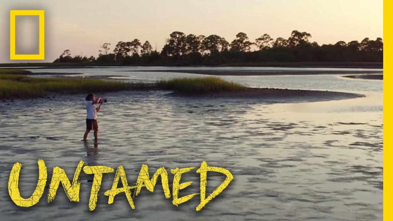 wild untamed