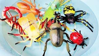 곤충 파충류 이름 한글 영어로 배우기 Insect re…