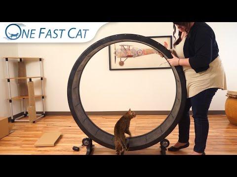 Assembling the Cat Exercise Wheel