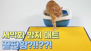 고양이 모래 사막화 방…
