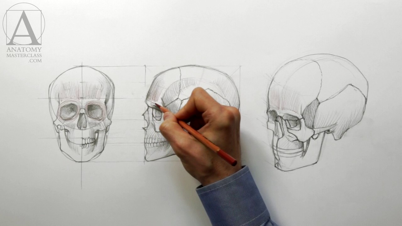 Face Anatomy Anatomy Master Class For Figurative Artists Youtube
