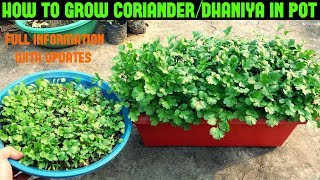 How to Grow Coriander/Dhaniya/Cilantro at Home (WITHIN 10 DAYS)