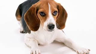 Как вывести запах собаки из квартиры?
