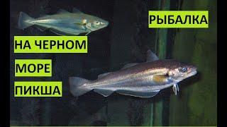 Рыбалка на Черном море Пикша Севастополь