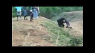 Таксист попытался сделать фото с медведем и умер
