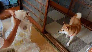 イタズラする猫と、風紀委員犬ヤトとの攻防
