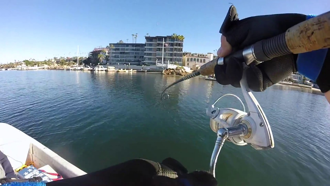 Sunny day fishing newport harbor surprise halibut youtube for Newport harbor fishing
