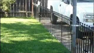 Siberian Husky (necessary Fencing)