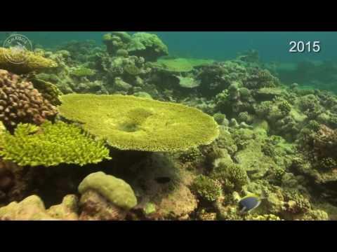 Ile Anglaise Middle – A classic seaward site