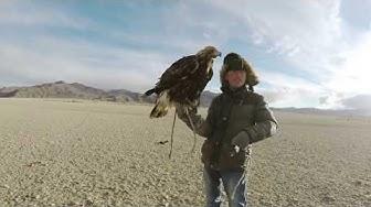 Adler in Aktion! 7 unglaubliche Momente von der Kamera festgehalten!