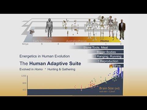 CARTA: Origins of Genus Homo – Herman Pontzer: Energetics and the Ecology of Early Homo