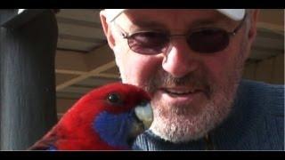 Hand Feeding An Australian Crimson Rosella