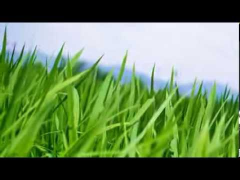 Millcreek Landscaping & Nursery | Northern Virginia | 703-759-7350 - Millcreek Landscaping & Nursery Northern Virginia 703-759-7350