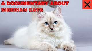 A documentary about Siberian Cats