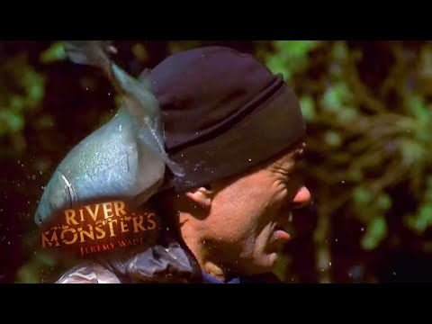 Dangerous Jumping Silver Carp | CARP | River Monsters