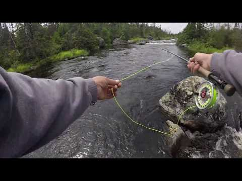 Fly Fishing For TROUT In The NEWFOUNDLAND WILDERNESS