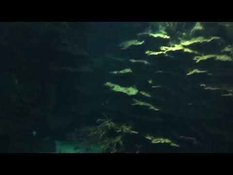 Kuwait Aquarium at scientific center