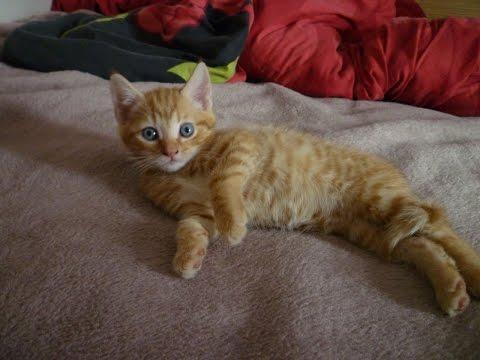 Top 10  funny cat vines!