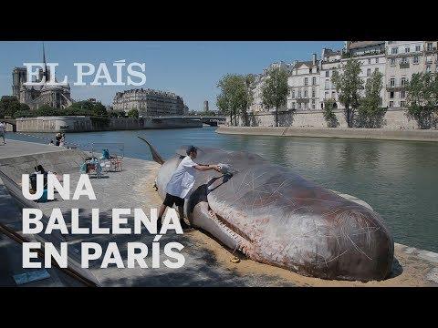 Una ballena varada en París   Internacional