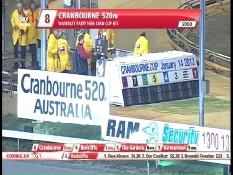 Exciting greyhound race at Cranbourne