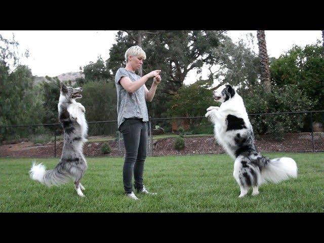 Wish invades Splash's dog training lesson - Funny Dogs