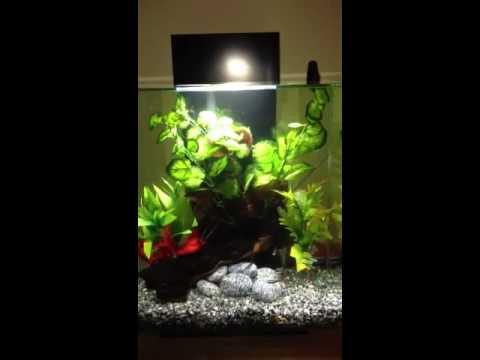 fluval edge 2 12gallon aquarium with led night lighting youtube. Black Bedroom Furniture Sets. Home Design Ideas
