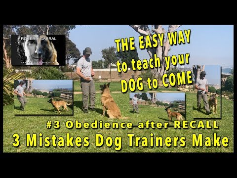 3 Mistakes Dog Trainers Make and How to AVOID Them #3  Obedience after RECALL