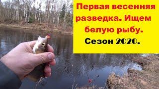 Первая весенняя разведка Ищем белую рыбу Рыбалка в проводку на реке Салаца Сезон 2020
