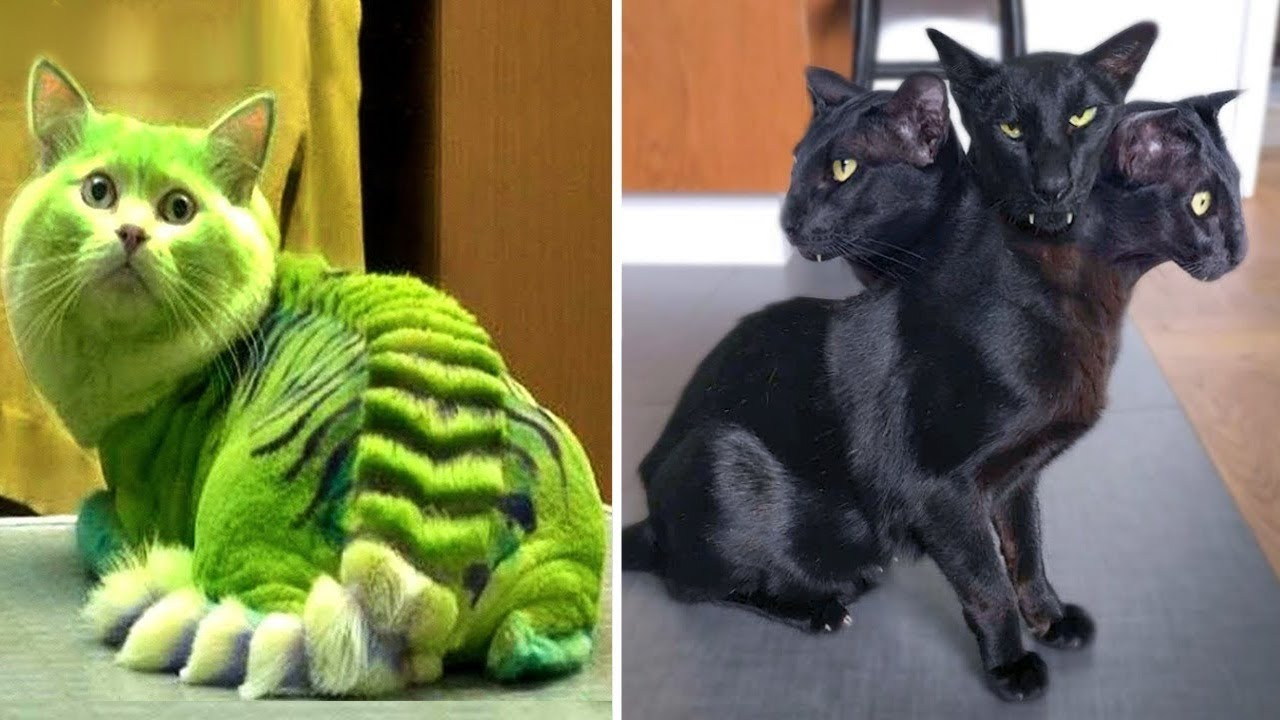 Bu 10 Tehlikeli Kediyi Sakın EVDE Beslemeyin ! Dünyanın En Tehlikeli Kedileri..