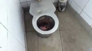Mettalic Kid Toilet