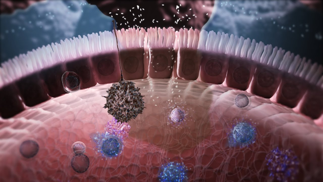 Animated Cartoon Wallpaper Immunology In The Gut Mucosa Youtube