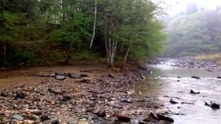 この映画のラストで出てくる、 内田有紀が木の上に座っているときの川で...