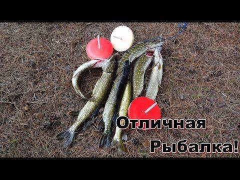 Ловля щуки на кружки 5.The pike fishing on mugs.