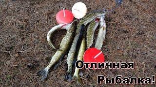 Ловля щуки на кружки 5.The pike fishing on mugs.(Отличная рыбалка,природа!Вот только холодно было))), 2015-10-16T13:31:03.000Z)