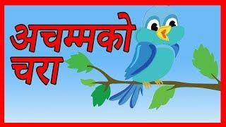 अचम्मको चरा   Nepali Story   Story For Kids   The Story of an Amazing Bird   Nepali Story