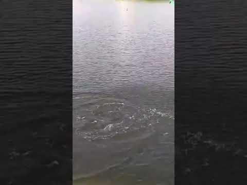 Fishing @ Sangareddy Dam